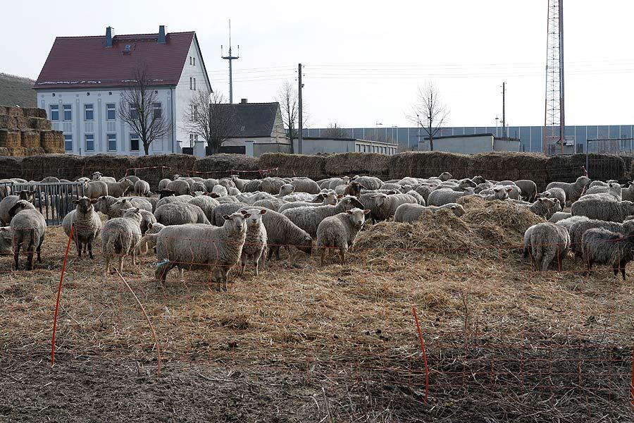 Schafe grasen neben der einstigen Gaststätte mit eigener Kegelbahn und Spielplatz.
