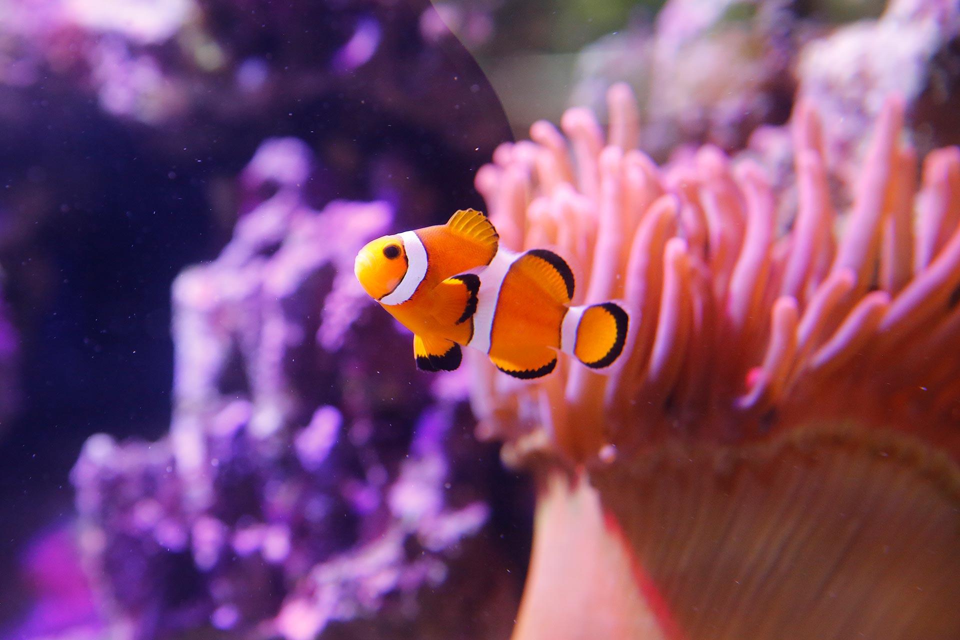 Ihr Hobby: Ein Meerwasseraquarium