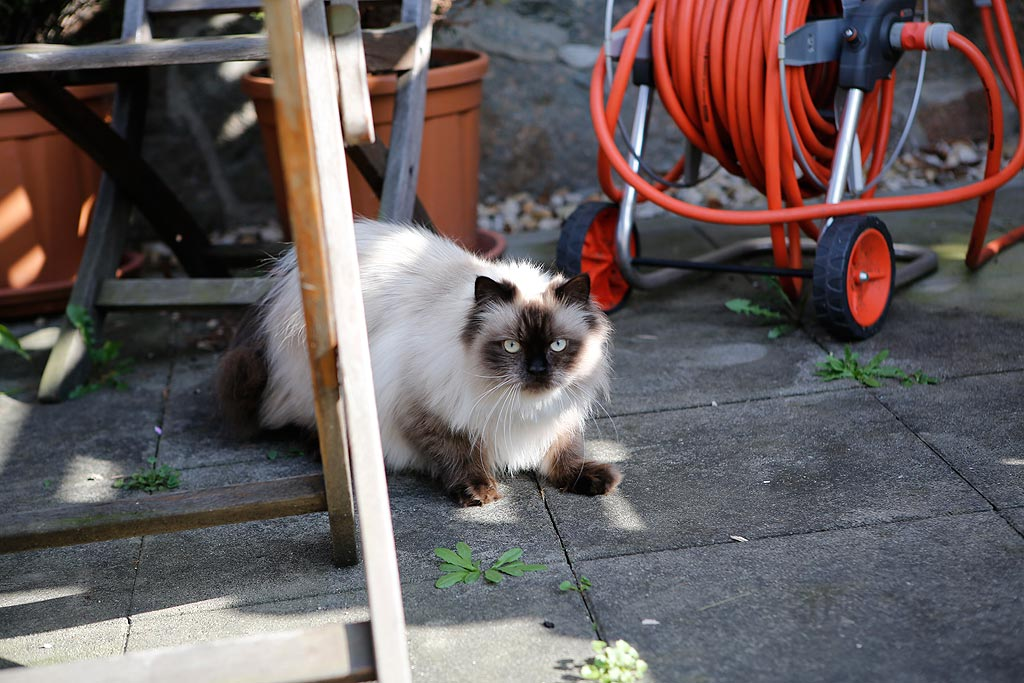 Katzendame Minou lebt mit im Haus in Leipzig-Lindenau.